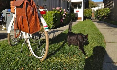 "Bike Commute Diaries: ""She's Home!"" said the Cat 