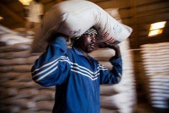 L'aide internationale, cheval de Troie des OGM en Afrique ? | Questions de développement ... | Scoop.it