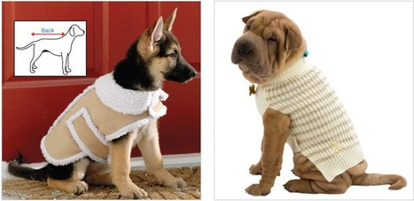 12 Adorable dog outfits for winter | Animals Make Life Better | Scoop.it