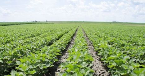 New Soybean Nitrogen Breakthrough Could Change Food Industry | MishMash | Scoop.it