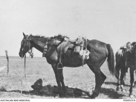 The Beersheba Chargers by Neil Smith | Inside History magazine | History- The Australian Light Horsemen-Battle of Beersheba | Scoop.it