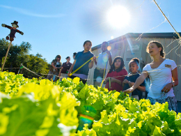 Organic Gardens Used As A Student Teaching Resource « CBS ... | Pedagogy and Research Theory | Scoop.it