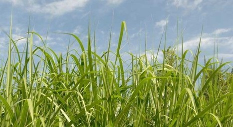 Turning Grass into Gas - OnEarth Magazine | BioChar | Scoop.it
