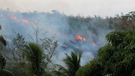 Amazon fires: Humans make rainforest more flammable - BBC News | Jeff Morris | Scoop.it
