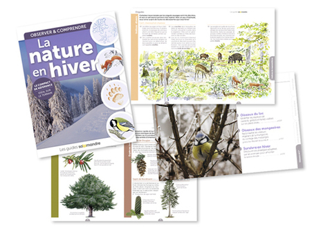 Guide de la Salamandre: La nature en hiver | Fiches nature ClC | Scoop.it