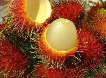 The top 10 exotic fruits   The weirdest fruits on the planet in one big list!   Scoop.it