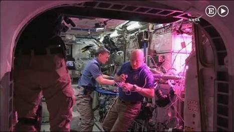 ¿A qué sabe una lechuga cultivada en el espacio? | I didn't know it was impossible.. and I did it :-) - No sabia que era imposible.. y lo hice :-) | Scoop.it
