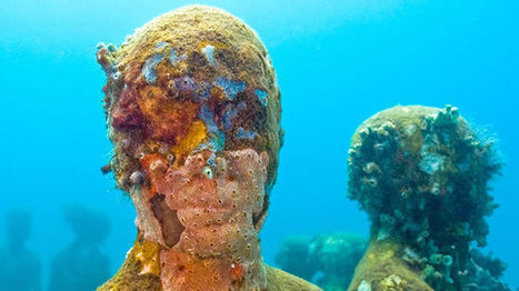 Is That A Starfish On My Face? | Earth Island Institute Philippines | Scoop.it