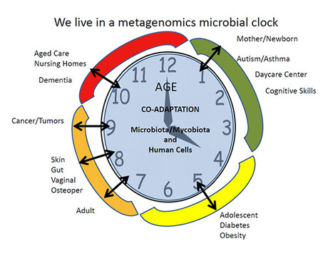 Microbial Changes of Decomposition   Bioinformática   Scoop.it