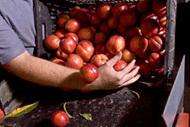 Productores de fruta y verdura ecológica - Faves i Pèsols.com   Cistelles Ecològiques, Slow Food i Km0   Scoop.it