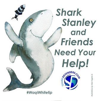Shark Defenders: SHARK STANLEY | PlanetNews | Scoop.it