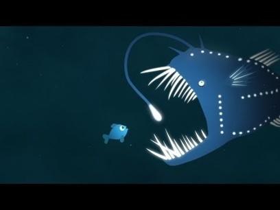 The brilliance of bioluminescence - Leslie Kenna   Biology   Scoop.it