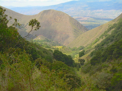 Restoring deforested landscapes means more than planting trees - Forests News, Center for International Forestry Research (blog)   Forestry   Scoop.it