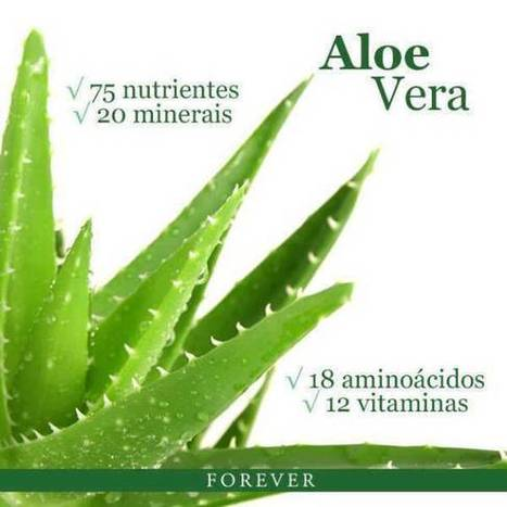 Aloe Barbadensis Miller . ACE Amongst All Aloes | Forever Living Aloe Vera Products In Pakistan | Scoop.it