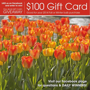 Enter to Win a Fall Flower Bulb Giveaway this Labor Day | Garden Media Group | Scoop.it