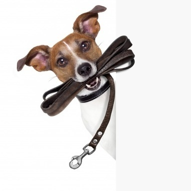 Burgess Pet Care » Blog Archive » Tips for lead training your dog | Dogs | Scoop.it