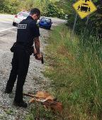 Cop Prevents Animal Rescue, Shoots, Threatens Arrest   Life Simplified   Scoop.it
