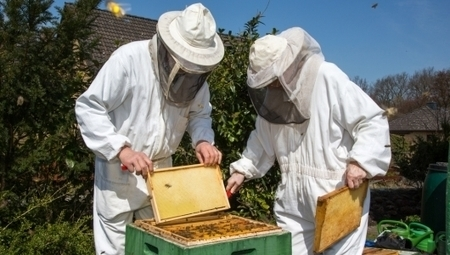 So, you want to be a beekeeper? | Gardening is more than Digging the Dirt | Scoop.it