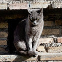 Strays Amid Rome Ruins Set Off a Culture Clash - New York Times | Ask The Cat Doctor | Scoop.it