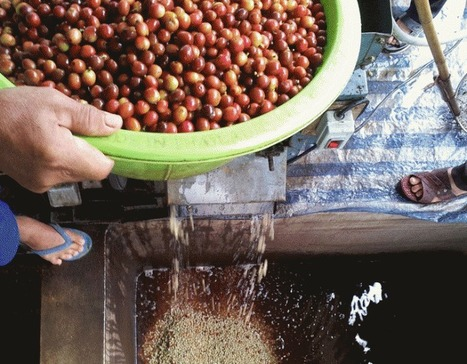 Shade Grown & Wet Processed: Laos' Developing Specialty Industry | Coffee News | Scoop.it