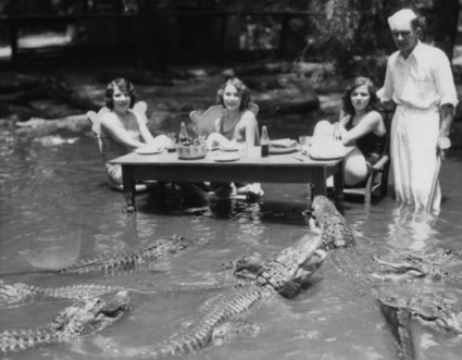 Alligators and Swamps and 21st Century Libraries | 21st century Learning Commons | Scoop.it