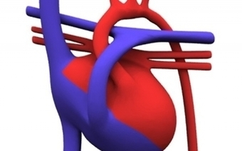 3-D heart saves little boy's life | NEWS.am Medicine - All about health and medicine | 3d printers and 3d scanners | Scoop.it