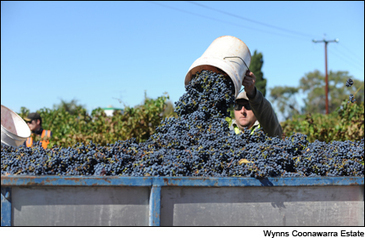 2013 Southern Hemisphere Wine Harvest Report: Australia and New Zealand | Vitabella Wine Daily Gossip | Scoop.it