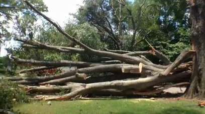 Proper tree care can mitigate storm damage - Monroe News Star | professional service | Scoop.it