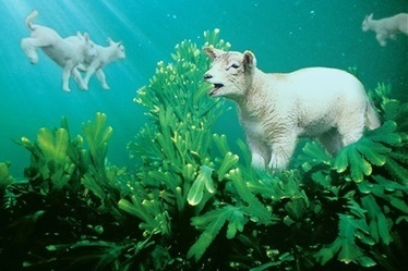Lamb marine diet lifts health benefits for consumers - The Land | Network Analysis | Scoop.it