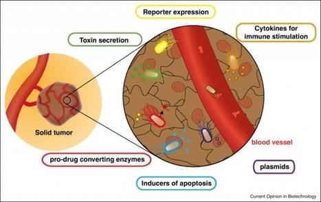 How to engineer bacteria to treat cancer | Host Cell & Pathogen Interactions | Scoop.it