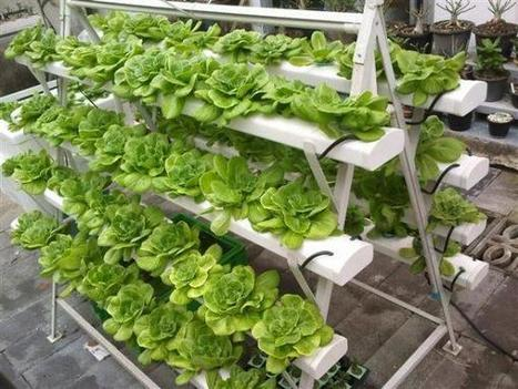 Roofs and balcony gardens vertical farm for Balcony aquaponics