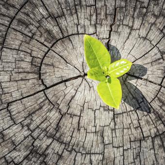 Concevoir une innovation de rupture par l'échange créatif   New Venture Creation & Growth   Scoop.it