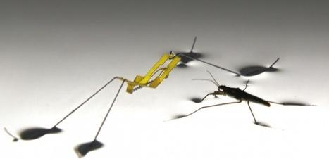 Quand l'araignée d'eau inspire un robot | EntomoNews | Scoop.it