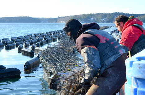 Lobsterman lawmaker wants $3 million Maine bond to fight ocean acidity | Changing Chemistry - The People Impacted by Ocean Acidification | Scoop.it
