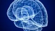 Una condición cerebral provoca la apatía | Espacios Multiactorales | Scoop.it
