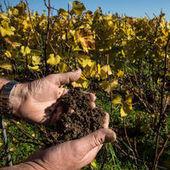 Sublimes champagnes - Le Monde | Autour du vin | Scoop.it