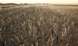 #California The Central Valley is sinking 2.5 inch a month: #drought forces farmers to ponder the abyss | Messenger for mother Earth | Scoop.it
