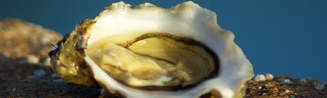 Recettes bretonnes - recette de cuisine Morbihan   Education   Scoop.it