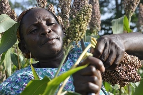 One Acre Fund | Agribusiness | Scoop.it