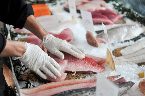 Catfished by a Catfish: 1 in 5 Seafood Samples Is Fake, Report Finds   Ejemplos de Malas Prácticas en RSC   Scoop.it