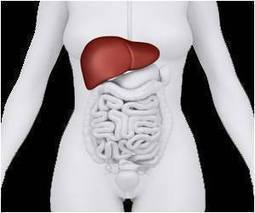 Ubat Penyakit Hati (Liver) | Kesihatan | Scoop.it