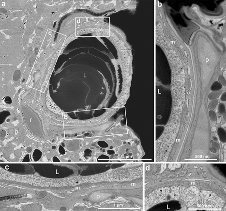 Eye-like ocelloids are built from different endosymbiotically acquired components : Nature : Nature Publishing Group | Plant Biology Teaching Resources (Higher Education) | Scoop.it