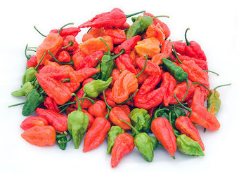 Molecular factors, unique ecological environment make Bhut Jolokia world's hottest chilli | All About Food | Scoop.it