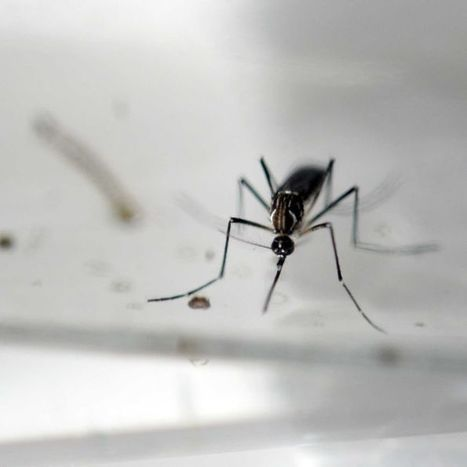 Authorities confirm Queensland woman contracted Zika virus | Emerging Viruses, Virus Discovery and Virus Characterization | Scoop.it
