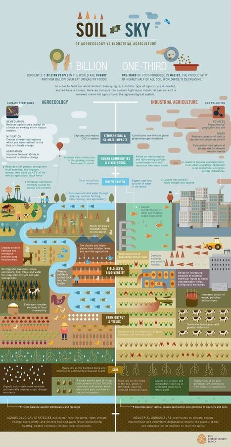Agroecology vs Industrial Agriculture: Feeding the World Sustainably - Infographic | Agroecology | Scoop.it