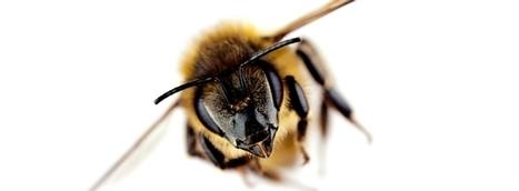 Bad buzz: les prévenir et les gérer | Construire et gérer son e-reputation | Scoop.it