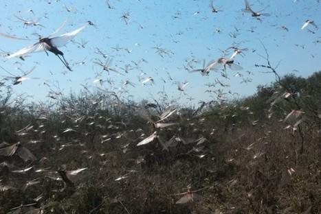 Sélection scientifique de la semaine (numéro 205) | EntomoScience | Scoop.it