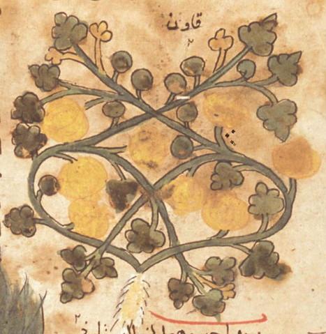 Medieval emergence of sweet melons, Cucumis melo (Cucurbitaceae) | Bio { Cultural } Diversity | Scoop.it