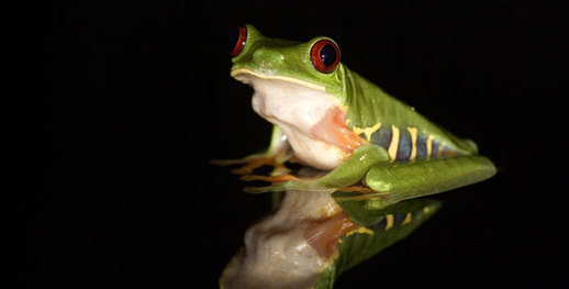 WATCH: Frogs: The Thin Green Line - A World Without Amphibians
