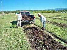 El Estiercol como abono organico | Agronomía para Todos | lombricultura | Scoop.it